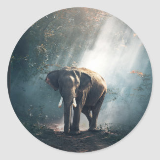 Asian Elephant in a Sunlit Forest Clearing Classic Round Sticker