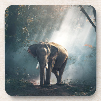 Asian Elephant in a Sunlit Forest Clearing Coaster