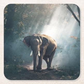 Asian Elephant in a Sunlit Forest Clearing Square Paper Coaster