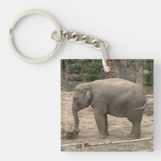 Asian elephant Single-Sided square acrylic key ring