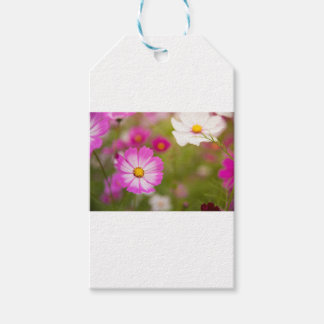 Asian flower gift tags
