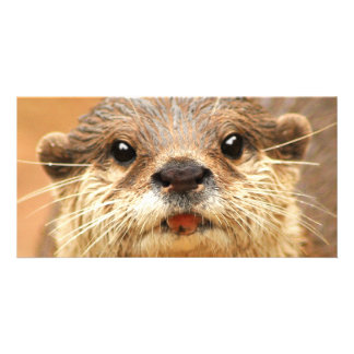 Asian Small Clawed Otter Photo Cards