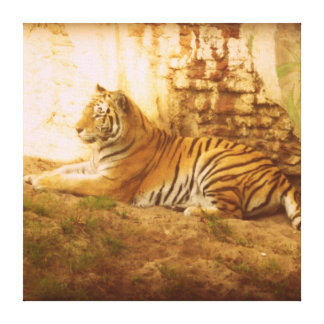 Asian Tiger Gallery Wrap Canvas