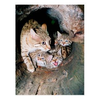 Asian wildcat postcard