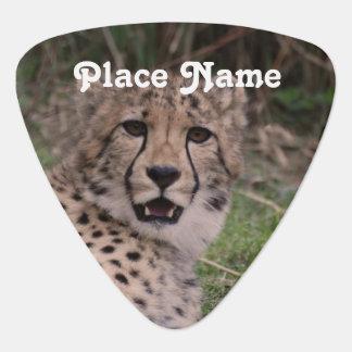 Asiatic Cheetah Plectrum