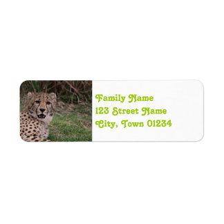 Asiatic Cheetah Return Address Label