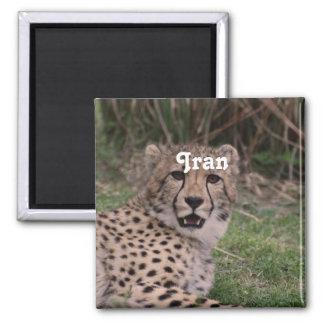 Asiatic Cheetah Refrigerator Magnets