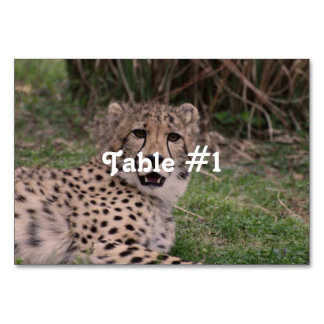 Asiatic Cheetah Table Cards