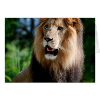 Asiatic Lion of Iran Card