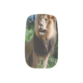 Asiatic Lion of Iran Nails Stickers