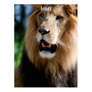 Asiatic Lion of Iran Postcard