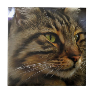 Aslan The Long Haired Tabby Cat Small Square Tile