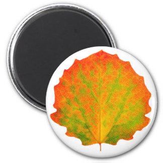 Aspen autumn leaf 6 cm round magnet