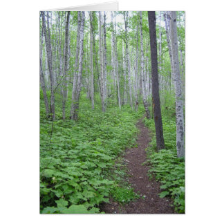 Aspen Forest, BC Card