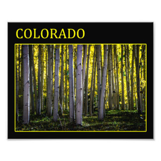 Aspen Forest Photo Print