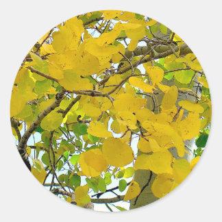 Aspen Gold Sealers! Round Sticker