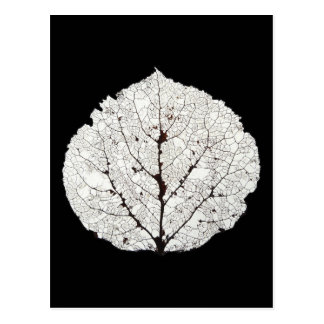Aspen Leaf Skeleton 1 Postcard