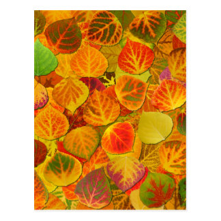 Aspen Leaves Collage Solid Medley 1 Postcard