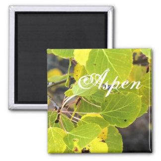 Aspen square magnet