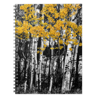 Aspen Touch of Orange Notebooks