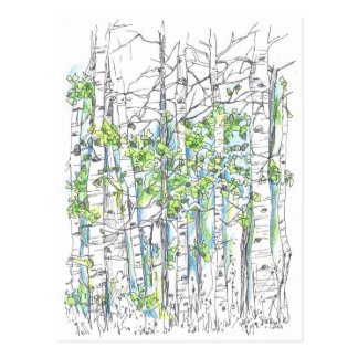 Aspen Tree Grove Ink Drawing Nature Art Postcard