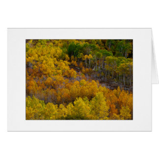 """Aspen Tree Hill"" Card"