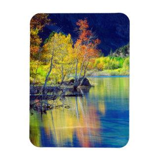 Aspen tree in autumn reflecting in Grant Lake Magnet
