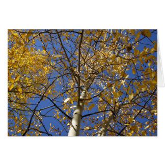 Aspen tree looking up through yellow leaves. card