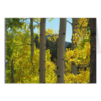 Aspen Tree Trunks in Golden Grove Card