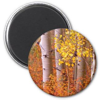 Aspen trees in Autumn 6 Cm Round Magnet