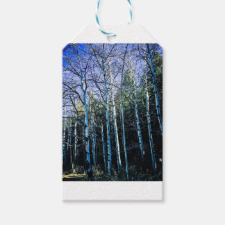 Aspen trees in the fall gift tags