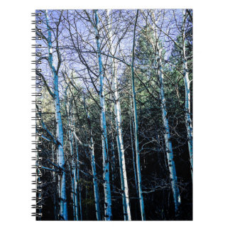 Aspen trees in the fall notebooks