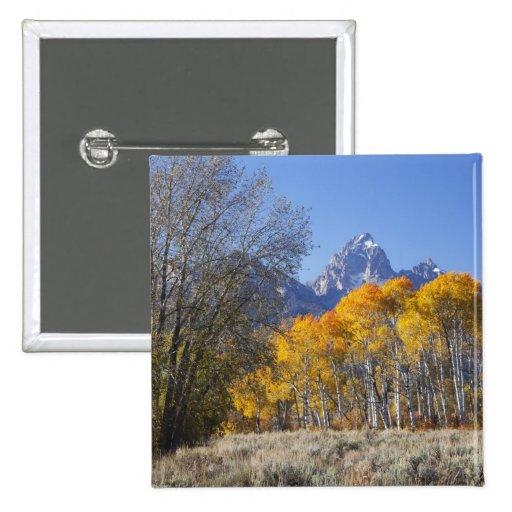 Aspen trees with the Teton mountain range 3 Buttons