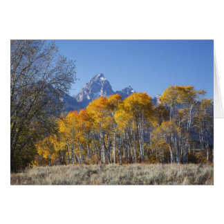 Aspen trees with the Teton mountain range 4 Card