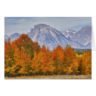 Aspen trees with the Teton mountain range 5 Card