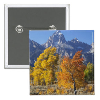 Aspen trees with the Teton mountain range 6 15 Cm Square Badge