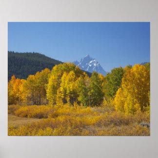 Aspen trees with the Teton mountain range 7 Print