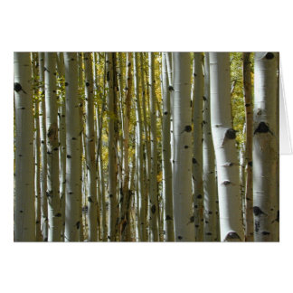 Aspen Trunks II card