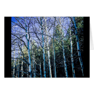 Aspens and pine trees in the fall card