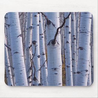 Aspens In Gunnison National Park Mouse Pad