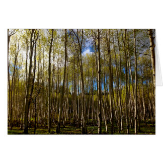Aspens in the Brazos, New Mexico Card