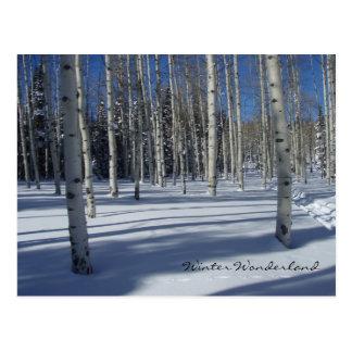 Aspens in Winter postcard