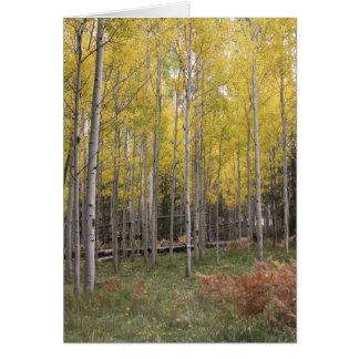 Aspen's yellow glow card