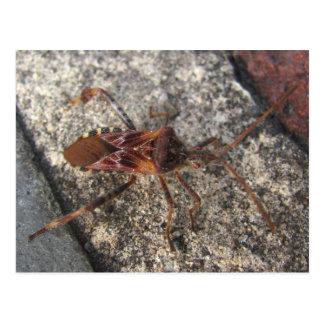 Assassin Bug ~ postcard