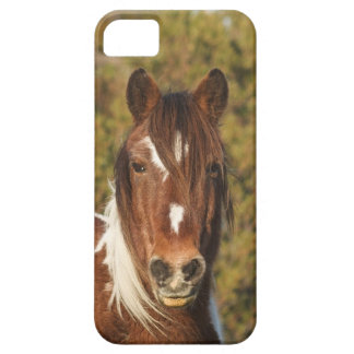 Assateague Pony 02 Case For The iPhone 5