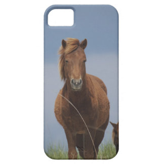 Assateague Pony iPhone 5 Covers