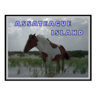 Assateague Wild Horses 2 Postcard