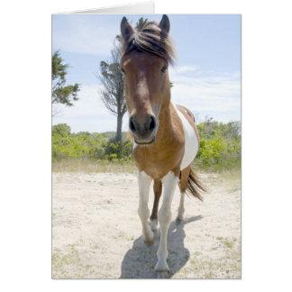 Assateague Wild Pony Card
