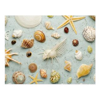 Assorted seashells on blue background postcard