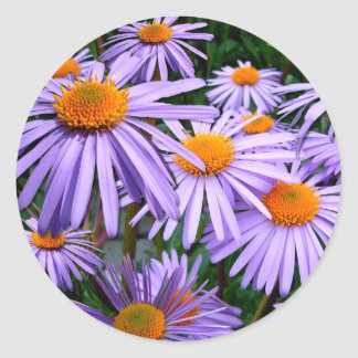 Aster-Tongolensis flower Classic Round Sticker
